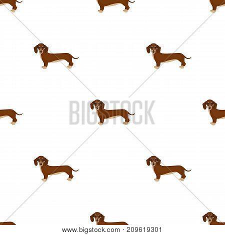 Dachshund, single icon in cartoon style.Dachshund, vector symbol stock illustration .
