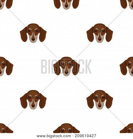 Dog, breed dachshund.Muzzle of the dachshund single icon in cartoon style vector symbol stock illustration .