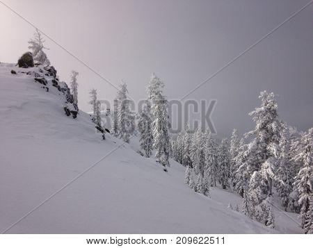 Erie, silent, morning among the woods of a freshly fallen alpine winter scene.