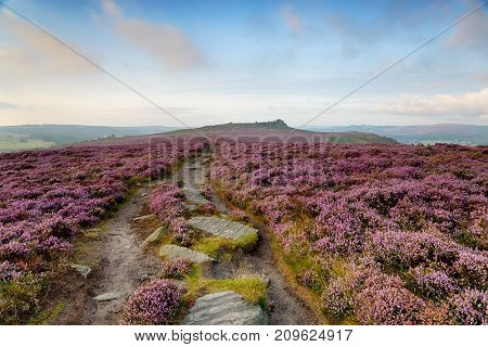 A path through the heather leading to Over Owler Tor at Winyards Nick in the Peak District National Park in Derbyshire