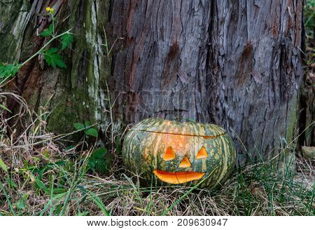 Jack-o-lantern In Front Of Large Tree