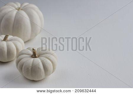 Three white mini pumpkins on a white background.