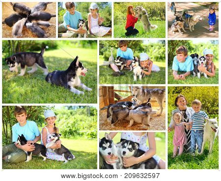 Collage with husky dogs and six happy people in green sunny garden