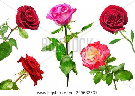 Set of beautiful red roses isolated on white background. Flowers from different angles.