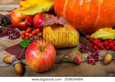Thanksgiving Background With Apples, Pear, Fall Leaves And Acorns.