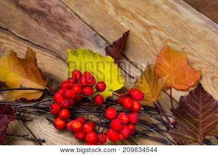 Fall Rustic Background With Leaves And Ripe Rowan Berries