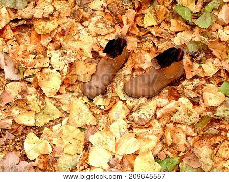 Working Class Boots in Autumn Leaves Australia