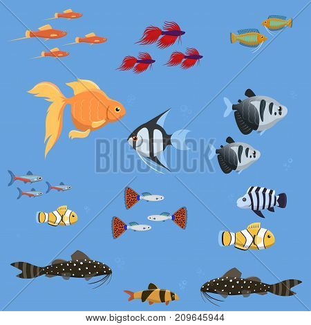 Exotic tropical aquarium fish different colors underwater ocean species aquatic nature flat vector illustration. Decorative wildlife cartoon fauna aquarium water marine life.