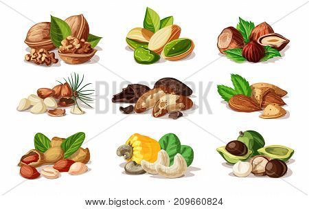 Cartoon colorful nuts set with walnut pistachio hazelnut almond peanut cashew macadamia pine brazil nuts isolated vector illustration