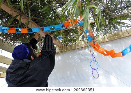 Jewish Orthodox Man Decorating A Sukkah