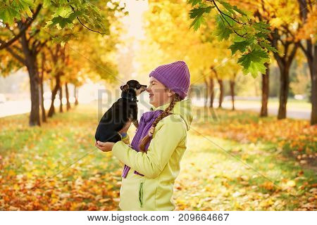 girl in the autumn leaves in the Park in the fresh air.Teenage girl smiling, playing with Chihuahua dog in autumn Park.Portrait of a baby with a small dog.A warm evening of October, with the beam of sunlight.