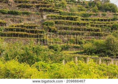 the characteristic viticultural landscape of Carema PiedmontItaly  /the slopes hilly  have been terraced  with the construction of dry stone supporting walls on which the pylons rise with  vineyards