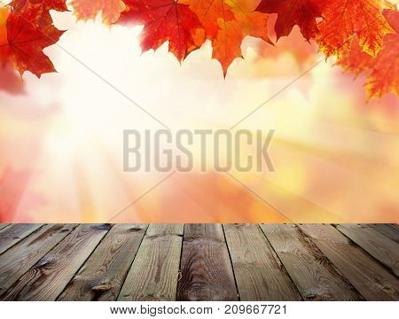Autumn Background with Fall Leaves Abstract Light Steam and Empty Wooden Board with Copy Space. Template Mock up for Display of Product