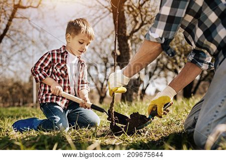 Sunny day. Strong man wearing rubber gloves and holding sapling while pouring ground on the root