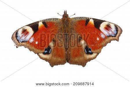 European Peacock butterfly isolated on white background. Top view.