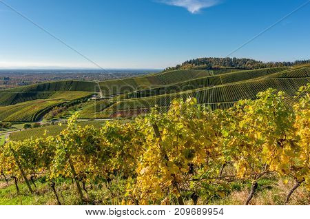 Vineyards in autumn. Autumnal landscape in the vineyards of Southern Germany on a sunny evening.