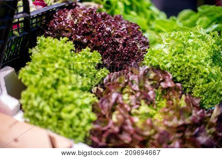 The leaves of red and green lettuce lie on the counter in the store