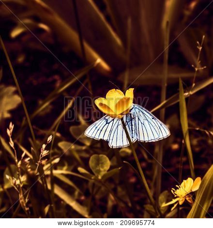 Nice butterfly with blue wings in mystical forest