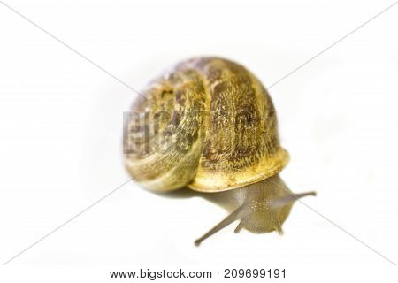 The Snail Crawls In A Wooden Box