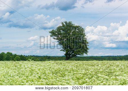 Nobody Outside Field Landscape