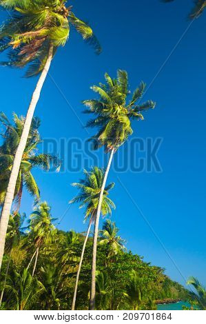 Jungle Landscape Under Palms