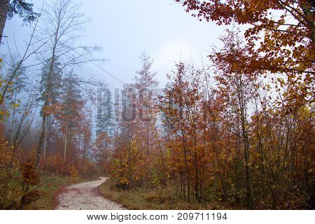 Colorful Autumn With Morning Fog