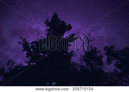 Long exposure and High ISO shot of star over silhouette of tree at night. Purple tone effect.