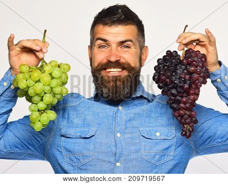 Farmer Shows Harvest. Man With Beard Holds Bunches Of Grapes