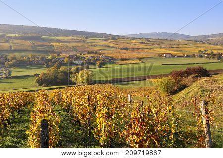 Landscape of France the Burgundy region: autumn vineyard. Focus selective