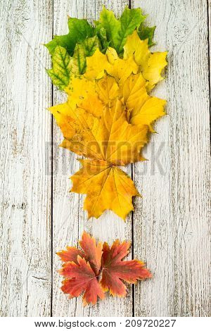 Maple Leaves With Color Gradient On White Wooden Background Arranged In The Shape Of An Exclamation