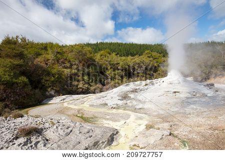 Lady Knox Geyser erupting at Wai-O-Tapu Geothermal Wonderland near Rotorua in New Zealand