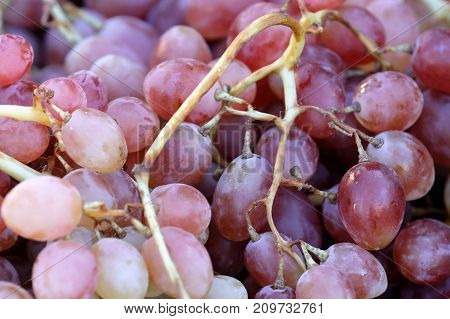 a bunch of grapes freshly harvested red