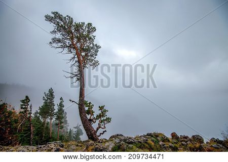 Scenic autumn view with lonely pine tree, mountain landscape and dramatic sky