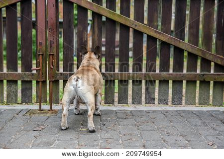 Dog Is At The Fence