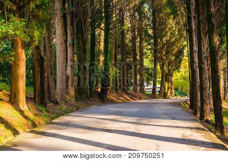 Curved alley with long shadows in Sochi Arboretum in sunny day Russia
