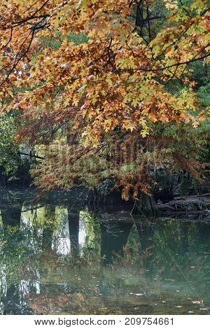 Autumn Colors On The Pond