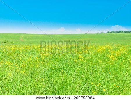 Grass Land Sunny Summertime