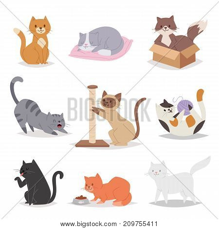 Funny cartoon cats characters different breeds illustration. in cartoon style. Funny happy kitty isolated friendly mammal. Domestic element group flat comic canine.