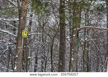 Birdhouses for birds in the trees in the winter forest
