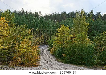 gray sandy road in a forest among trees