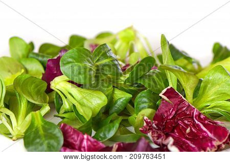 Mix Salad With Spinach, Isolated On White Background