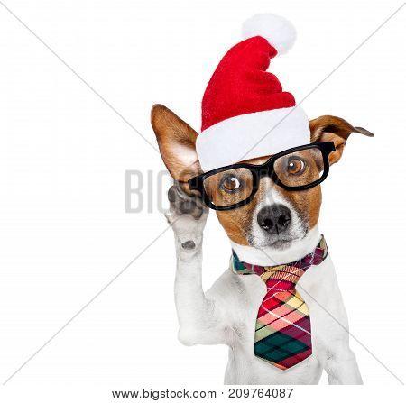 Dog Listening On  Christmas
