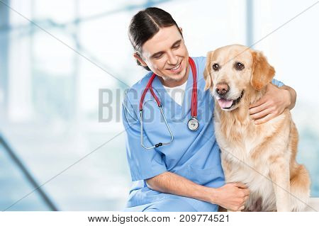 Cute dog doctor color background holding person