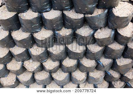 Soil In Bags Propagated