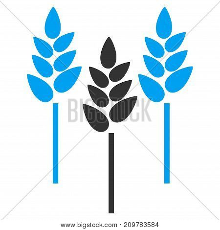 Wheat Ears vector icon. Flat bicolor blue and gray symbol. Pictogram is isolated on a white background. Designed for web and software interfaces.