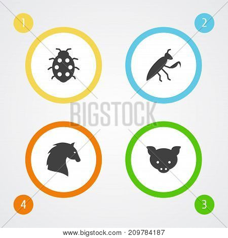 Collection Of Beetle, Steed, Grasshopper And Other Elements.  Set Of 4 Zoology Icons Set.