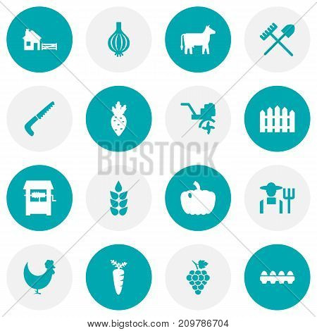 Collection Of Gourd, Rooster, Radish And Other Elements.  Set Of 16 Agriculture Icons Set.