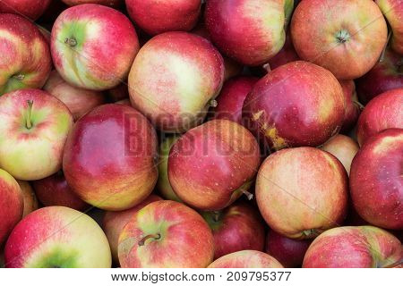 A bunch of beautiful fresh red yellow and green apples. Apples are in several layers. Useful fruits for health. Apples are for sale in the market. Food for weight loss.