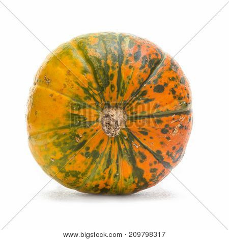 Natural Yellowish Pumpkin with Long Stem Over Pure white Background. Laid on Side. Square Image