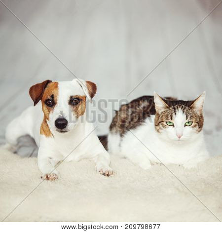 Dog and cat. Friends at home. Friendship pets